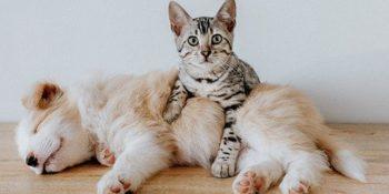 Welpen und Kitten mit BARF?